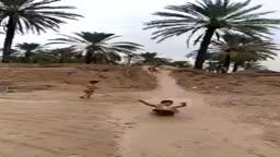 أفتتاح المدينة المائية في البصرة ٢٠١٦